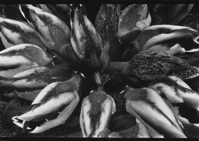 Sans titre (oiseau-fleurs), 44 x 66 cm, 2007