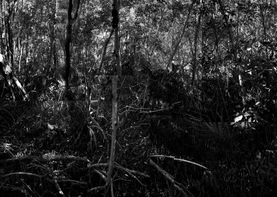 Black Mangroves Forest, #3,1/5, 102 x 152 cm, 2013