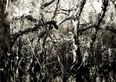 Florida Trail I, 1/5, 109 x 109 cm, 2012