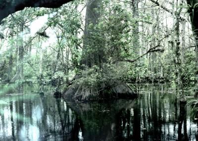 Florida Trail III, 3/9, 61 x 91 cm, 2012