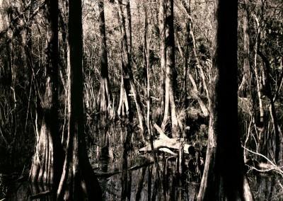 Florida Trail VI, 1/9, 91 x 61 cm, 2012
