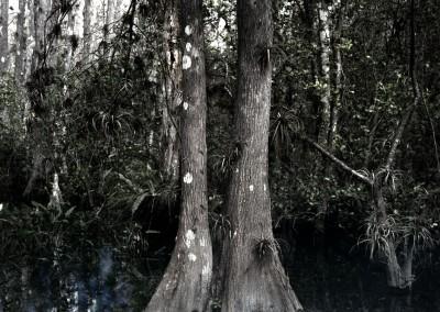Florida Trail V, 1/9, 91 x 61 cm, 2012