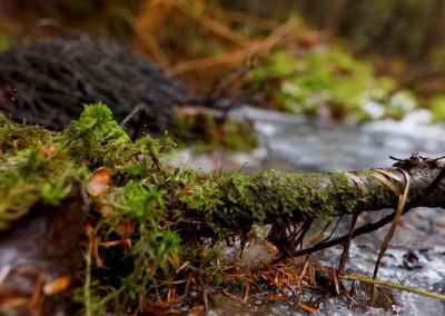 Imperceptible forêt 1, 2015