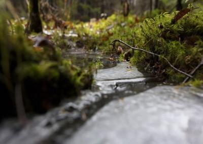Imperceptible forêt 2, 2015