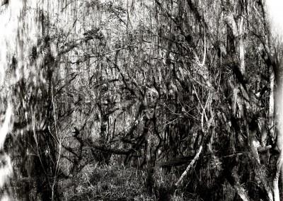 Kirby Storter Park 1, 1/9, 61 x 91 cm, 2012