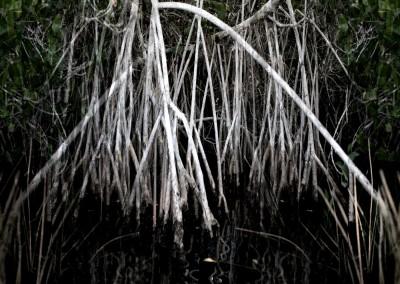 Mangrove IX, 1/9, 91 x 61 cm, 2012