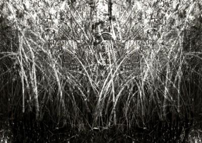 Mangrove I, 1/9, 91 x 61 cm, 2012