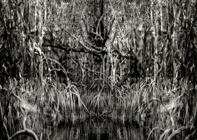 Mangrove IV, 1/9, 91 x 61 cm, 2012
