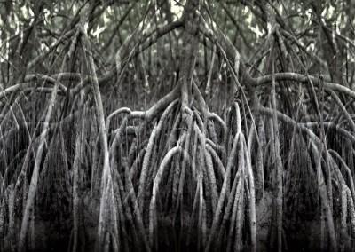 Mangrove VI, 1/1, 96,5 x 244 cm, 2012