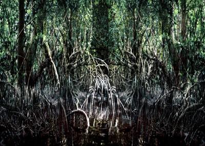 Mangrove VII, 1/1, 150 x 203 cm, 2012