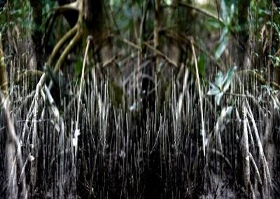 Mangrove VIII, 2/9, 91 x 61 cm, 2012