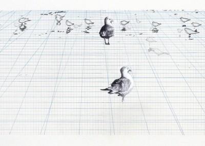 Observation #1, 23 x 70 cm, 2012