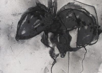 Poussière de fourmis, 22 x 28.5 cm, 2015