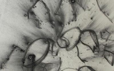 Poussière de fourmis
