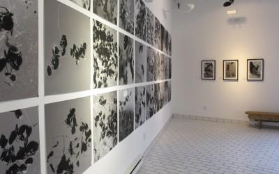 Exposition Poussière de fourmis
