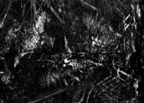 Black Mangroves Forest 1, 152 x 84 cm, 2013
