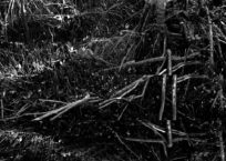 Black Mangroves Forest 2, 152 x 70 cm, 2013