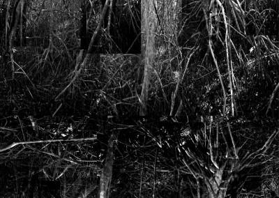 Black Mangroves Forest 4, 151 x 107 cm, 2013