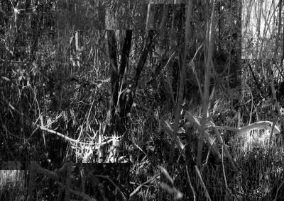 Black Mangroves Forest 5, 151 x 110.5 cm, 2013