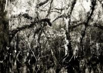Florida Trail I, 109 x 109 cm, 2012