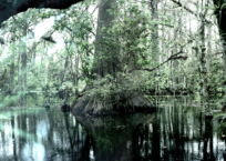 Florida Trail III, 61 x 91 cm, 2012