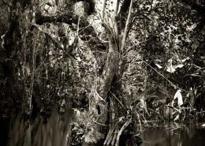 Florida Trail IV, 61 x 91 cm, 2012