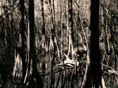 Florida Trail VI, 91 x 61 cm, 2012