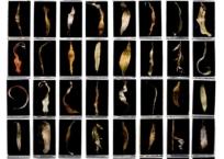 Clef - série la voie du bruant (ocre), 148 x 131 cm, 2010