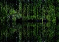 Île est (Arcadia), 61 x 76 cm, 2009