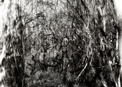 Kirby Storter Park 1, 61 x 91 cm, 2012
