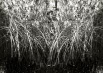 Mangrove I, 91 x 61 cm, 2012