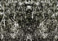 Mangrove III, 91 x 61 cm, 2012