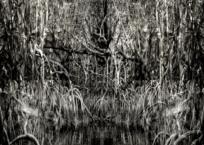 Mangrove IV, 91 x 61 cm, 2012