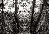 Mangrove V, 91 x 61 cm, 2012
