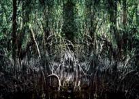 Mangrove VII, 150 x 203 cm, 2012