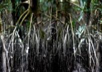 Mangrove VIII, 91 x 61 cm, 2012