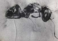 Poussière de fourmis, 22 x 28.5 cm, 2015, VENDU