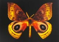Seraph 110, 46 x 61 cm, 2013