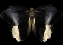 Seraph 009, 60 x 90 cm, 2013