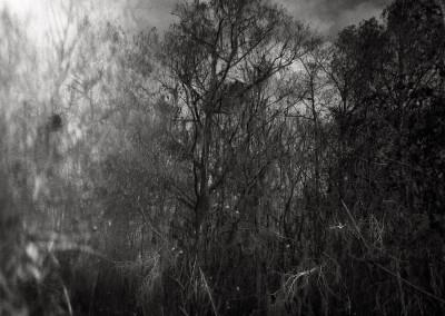 Tamiami Trail, 61 x 91 cm, 2012