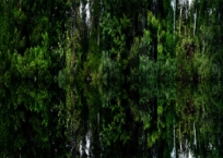 Île ouest (Lac Lesage), 61 x 76 cm, 2009